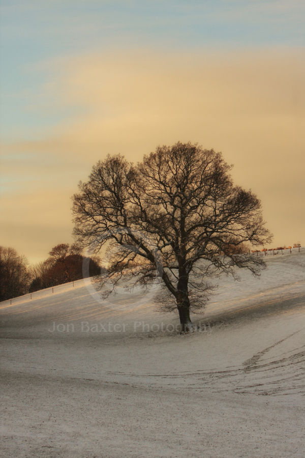 Tree in Snow ....