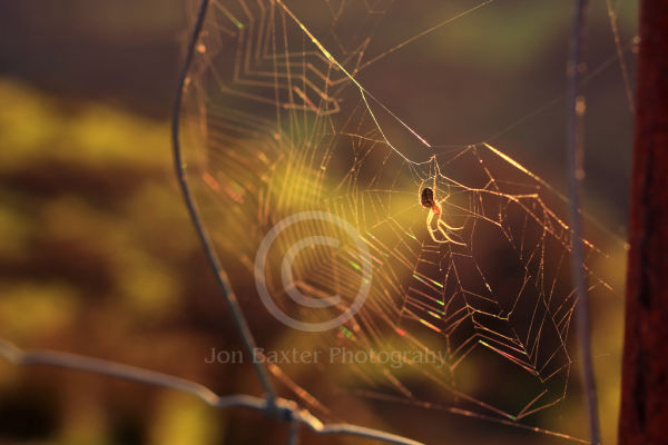 Rainbow web......