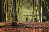 Bench in the woods ....