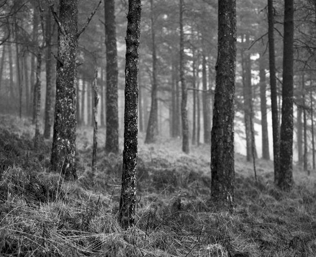 'Etive trees'