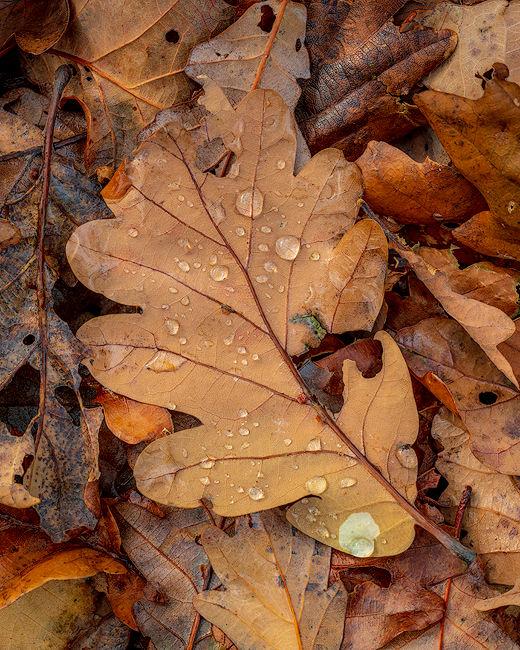 'Leaf Detail'
