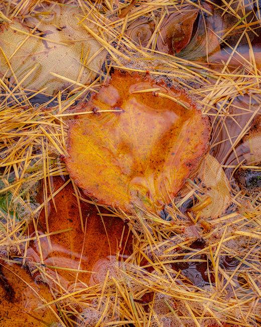 'Water logged Leaf'
