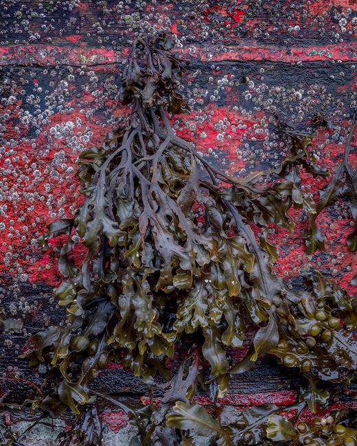 'Wreck and Seaweed #1'