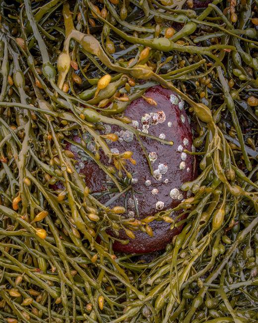 'Torridon seaweed #1'