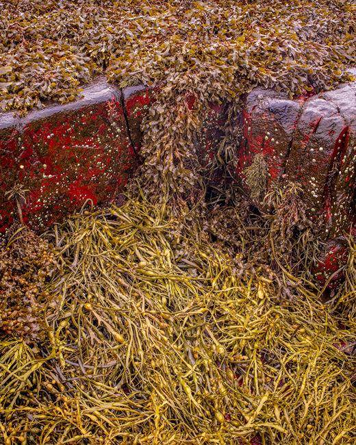 'Torridon seaweed #3'