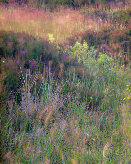 'Grasses abstract #1'