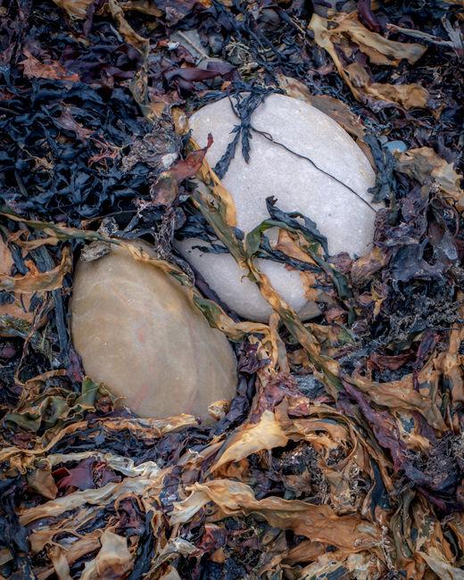 'RHB Seaweed #2'
