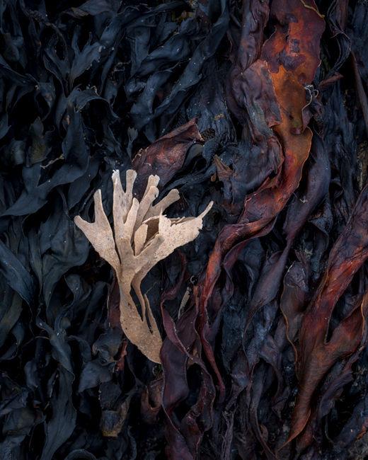 'RHB Seaweed #3'