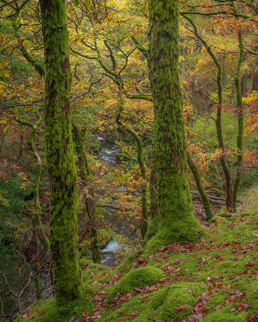 'Oaks at Buttermere'