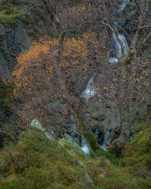 'Birch over Warnscale Beck'