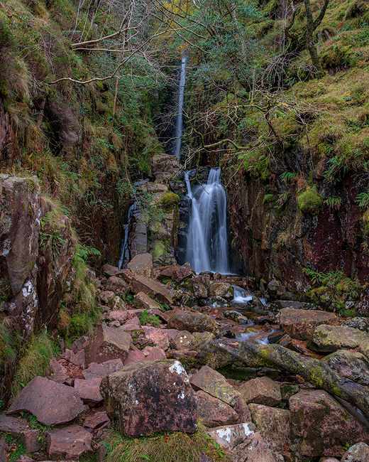 'Scales Force'