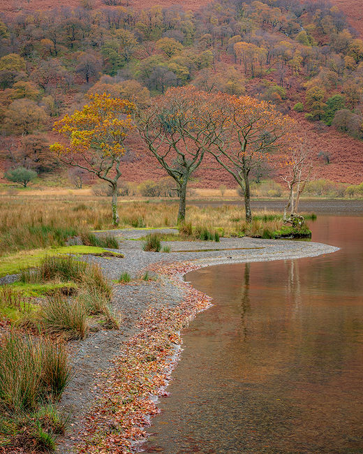 'Oaks beside Crummock Water'