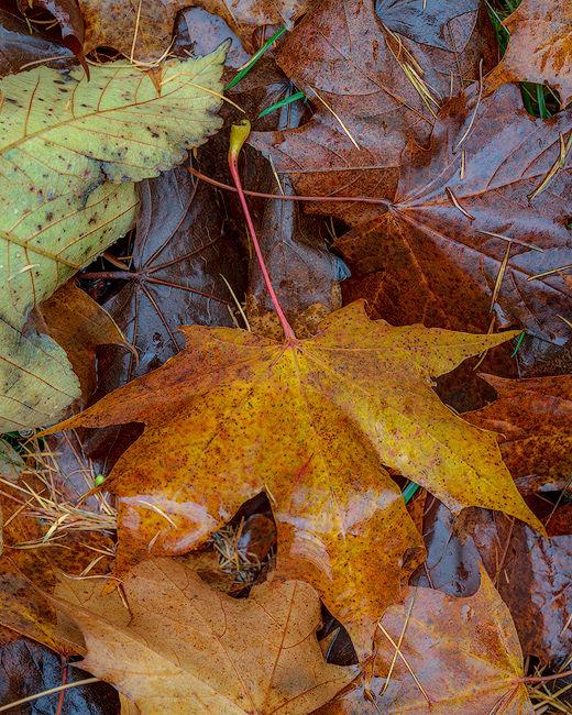 'Leaf detail #2'
