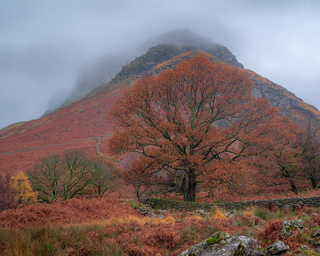 'Oak Tree in front of White Crag'
