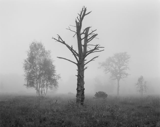 'Skipwith in the mist'