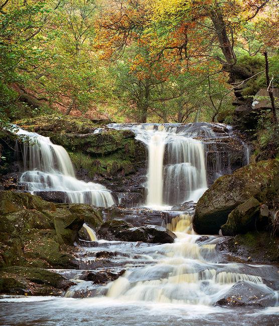 'Autumn at Thomason Foss'