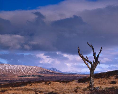 'Wilderness'