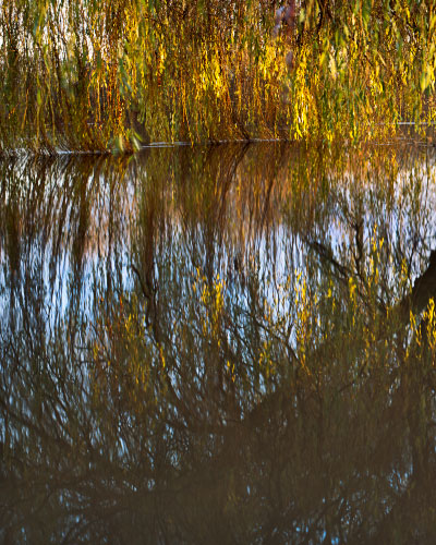 'Willows over the Derwent'