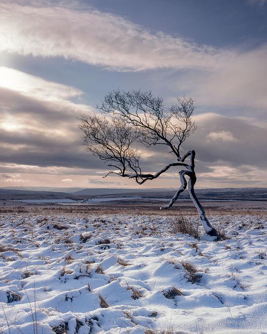 'Peak District Tree'