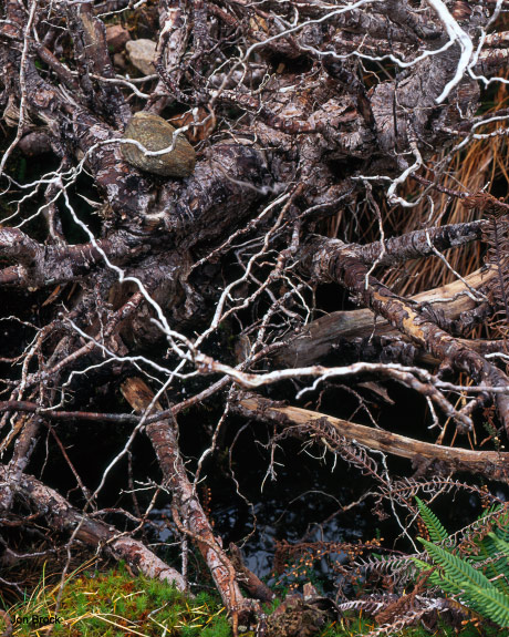 'Regenerating Forest'