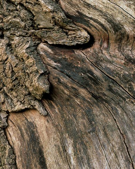 'Millington Burnt Log'