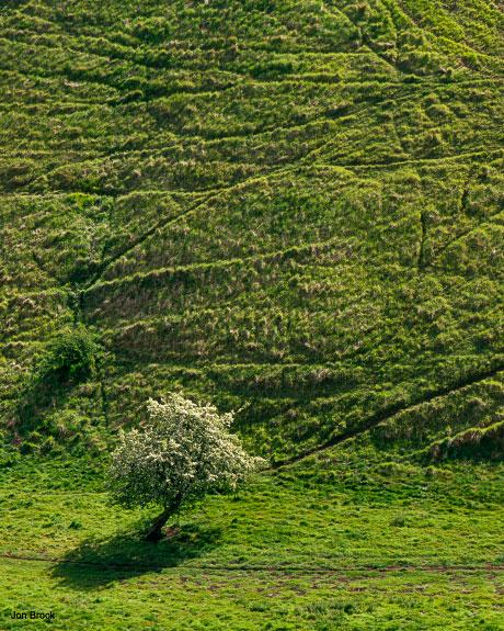 'Sylvan Tree'