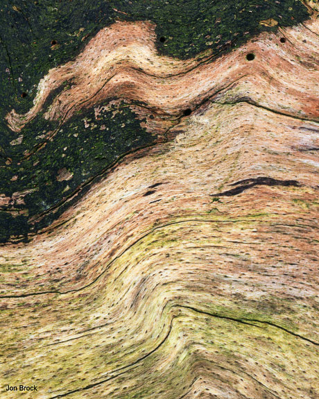 'Waves in a tree'