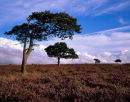 'NYM Trees'