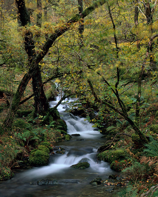 'Borrowdale Stream'