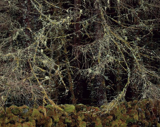 'Circle between Trees'