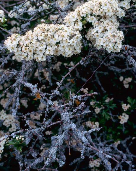 'Rusty Flowers'
