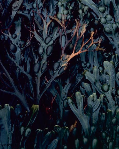 'Sea Weed'