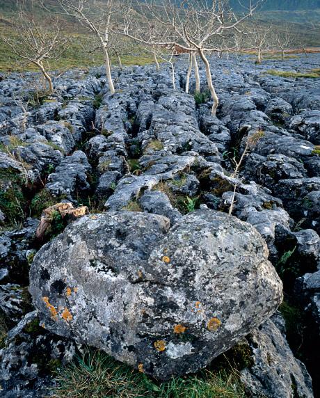 'Limestone Pavement'