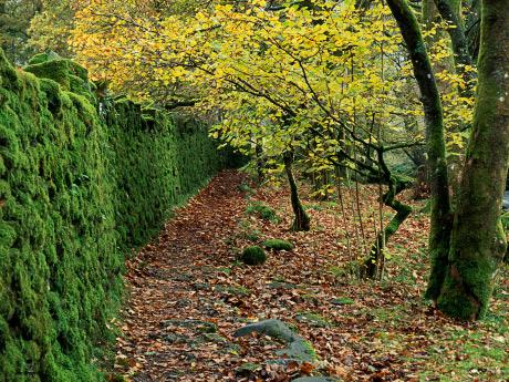 'A walk in Langdale'