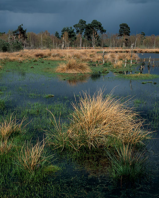'A Storm over Skipwith'