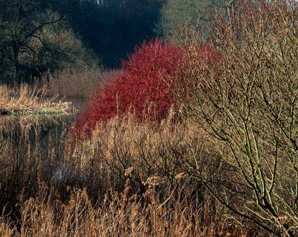 'Bishop Wilton Pond'
