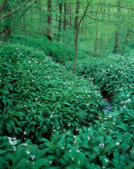 'Nunburnholme Woods'