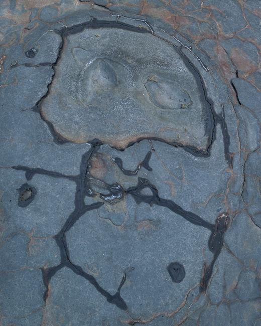 'Abstract #10 Mulgrave Alien II'