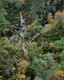 'Gnarled Tree'