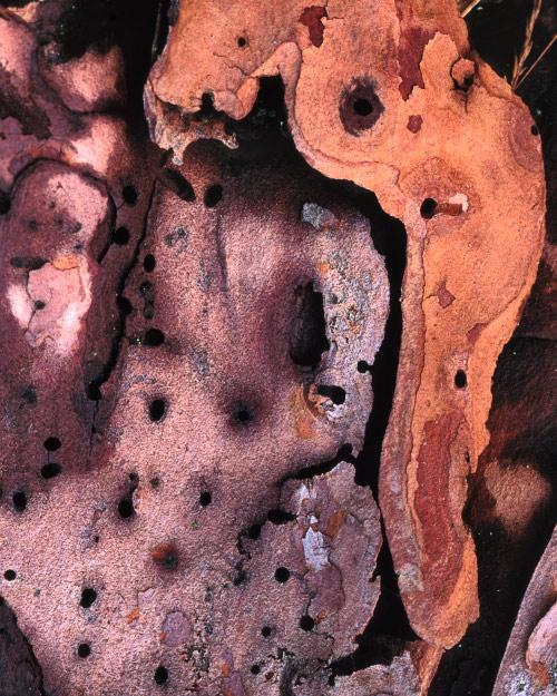 'Bark Abstract #2'