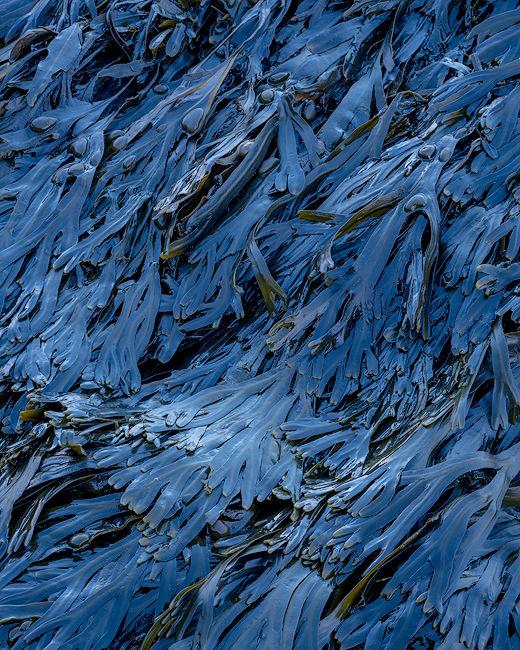 'Seaweed in blue light'