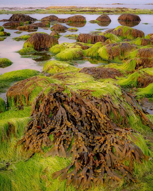 'Seaweed study RHB'