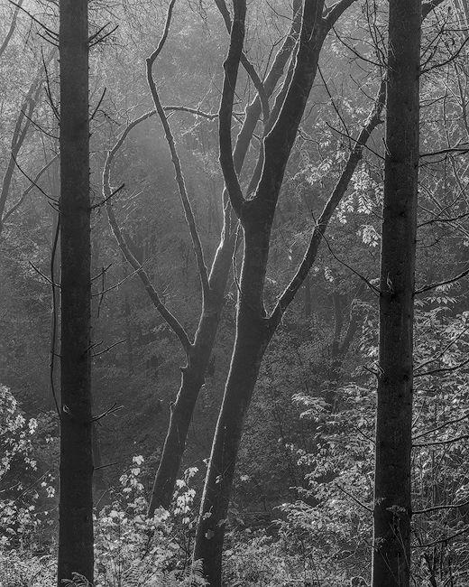 'Morning mist at Milllington'