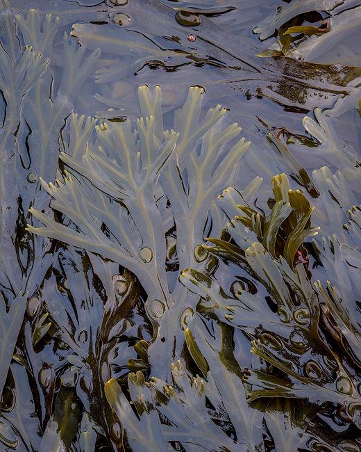 'Seaweed tree'