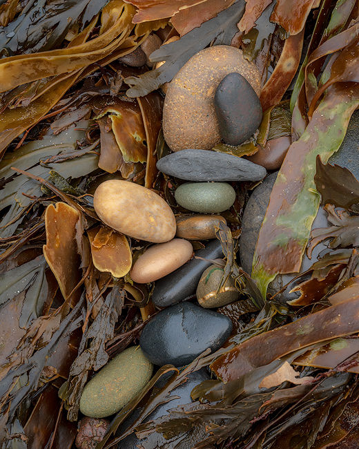 'Stones and seaweed'