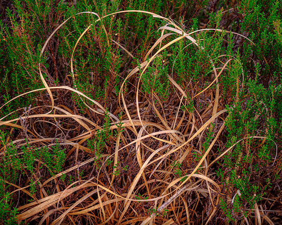 'Intertwined grasses'