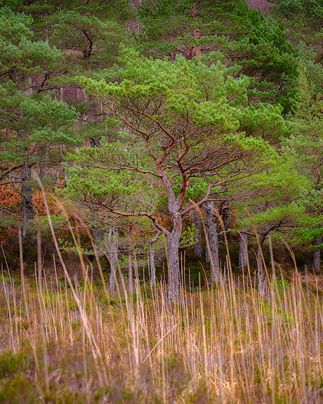 'Tree and Grasses'