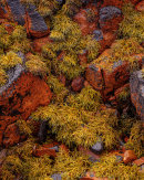 'Torridon Rocks and Seaweed'