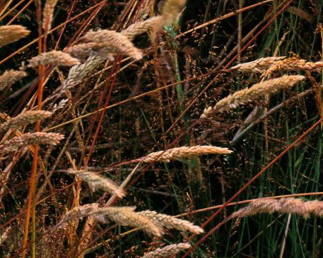 'Grasses Segment'