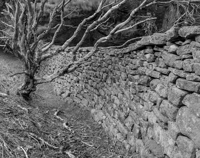 'Wall'